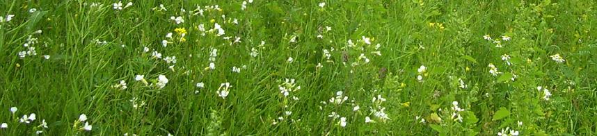 grass 06.jpg
