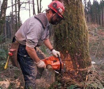 Arboricultural & Tree Services