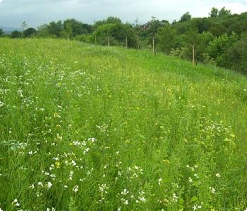 Wild Flower Meadows