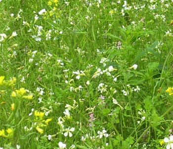 Wild Flower Meadows creation in Bolton, Lancashire